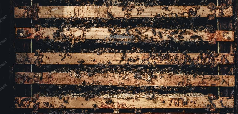 arılar kovan içerisinde