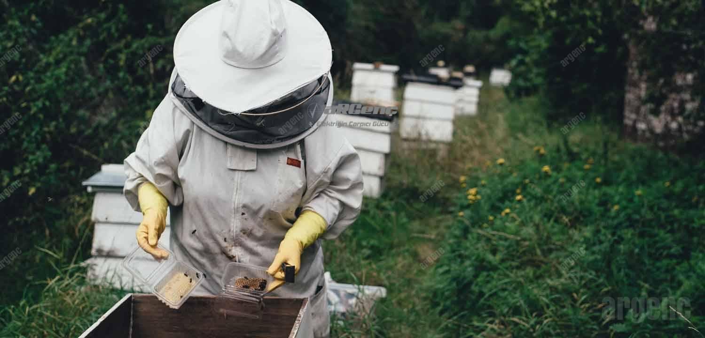 Bahar ayının ilk günlerinde arıcı arıların günlük kontrollerini yapıyor.